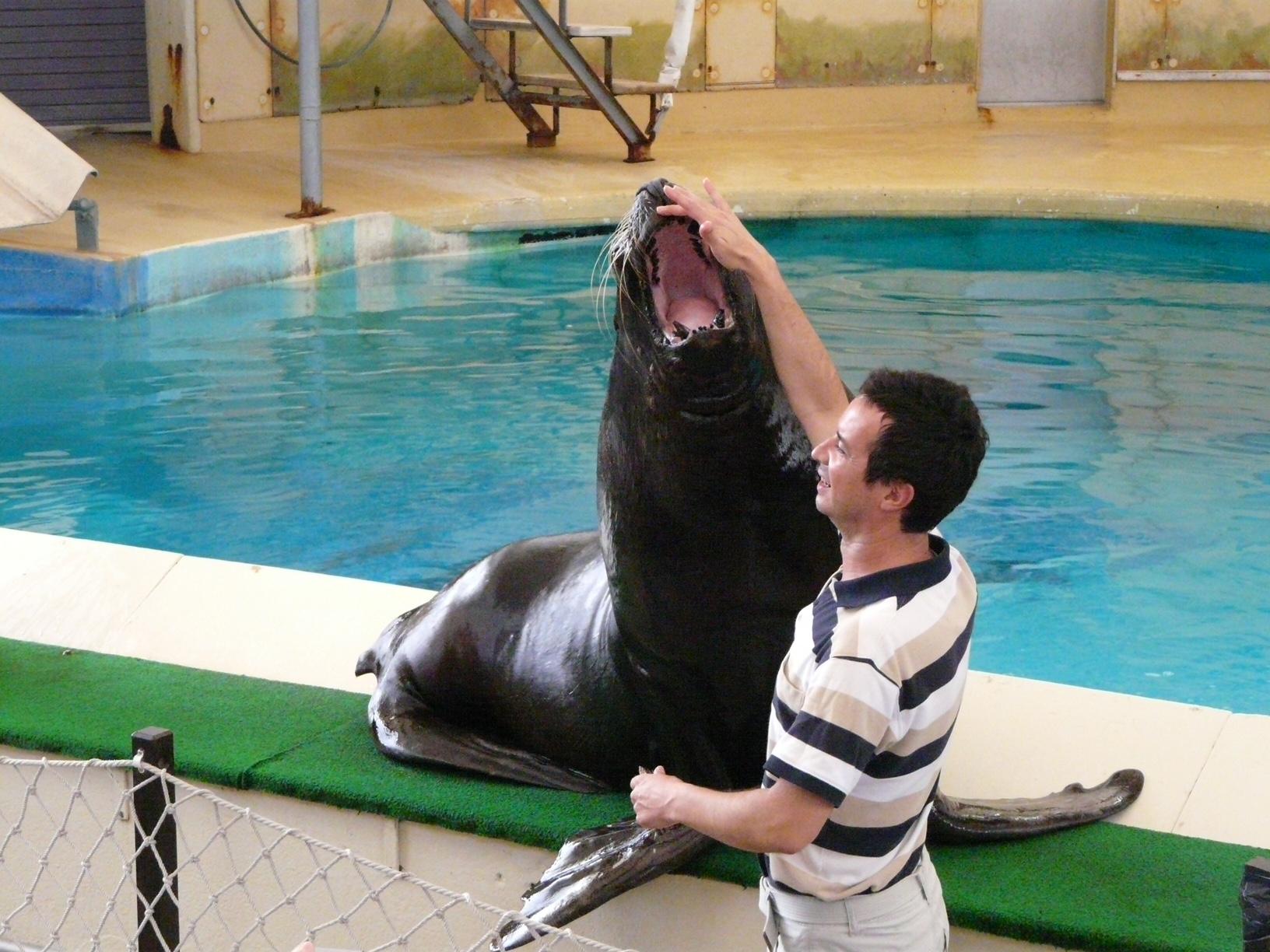 Зоопарк за галене в Швейцария - шоуто на тюлените