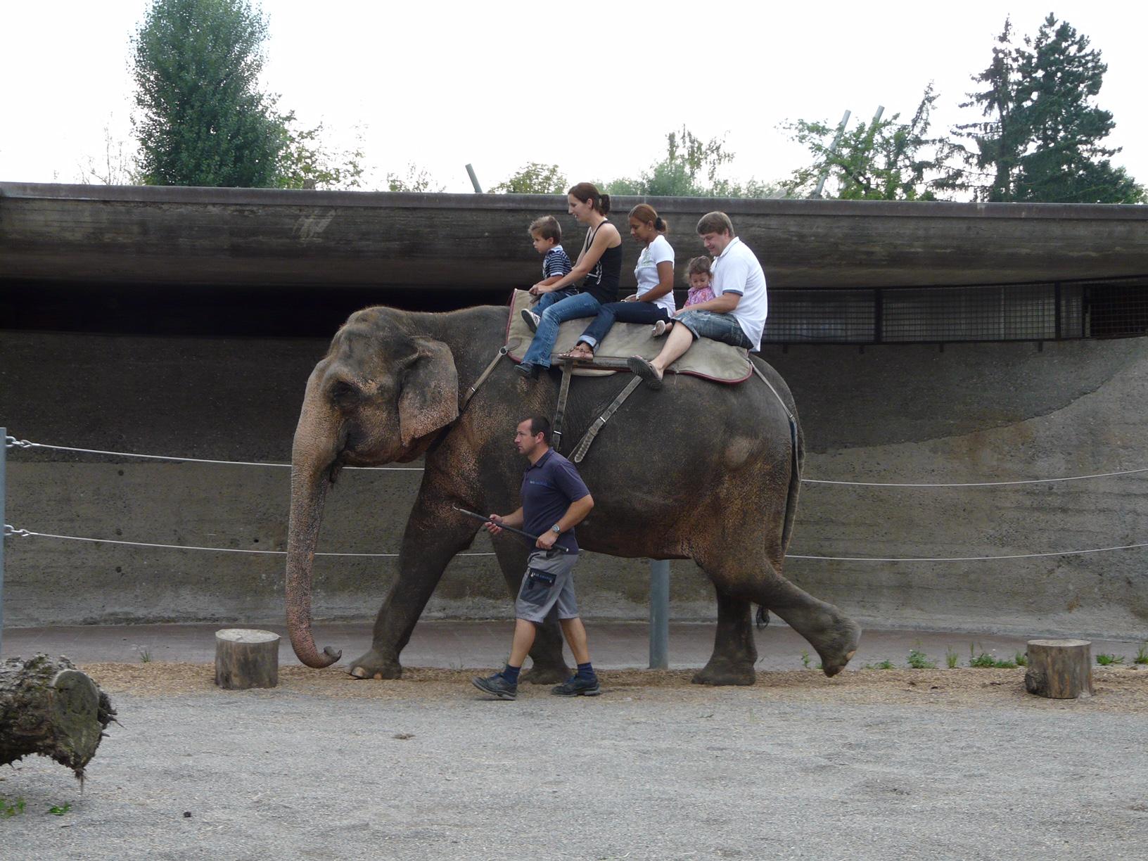 Зоопарк за галене в Швейцария - и язденето на слон е част от приключението