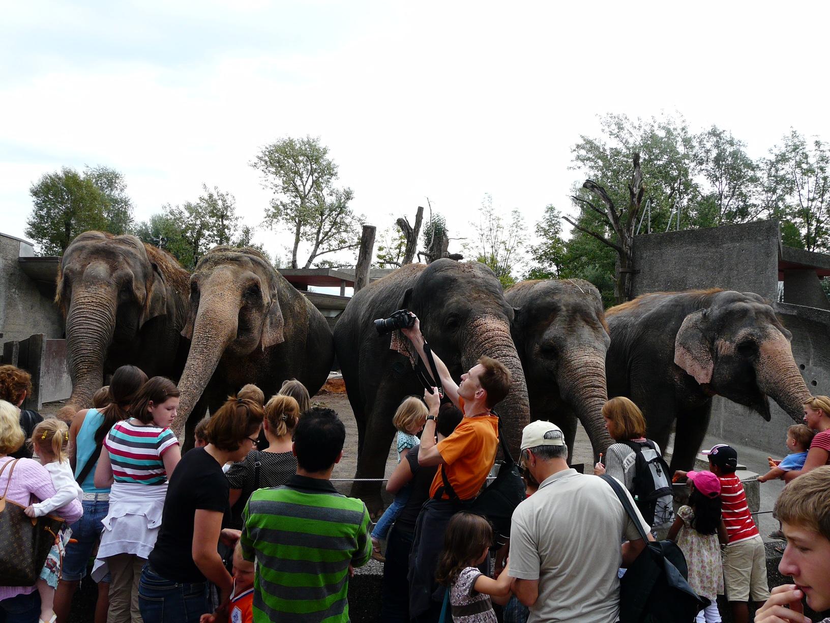 Зоопарк за галене в Швейцария - най-голямата атракция, храненето на слоновете