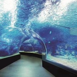 Да галиш пингвин, да яздиш делфин, да плуваш с кон - 1