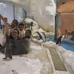 Да галиш пингвин, да яздиш делфин, да плуваш с кон - 7