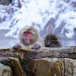 Япония – екзотика през зимата - 8