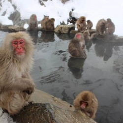 Япония – екзотика през зимата - 9