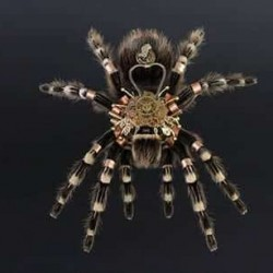 Паяк с часовников механизъм - 4