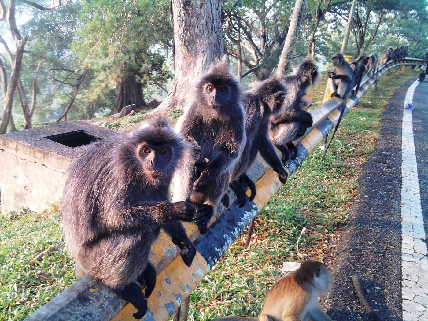 Зоопарк за галене в Швейцария - маймунски строй