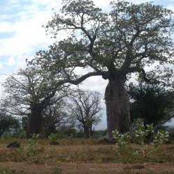 Доброволчеството: Пътешествие с мисия в Танзания - 5