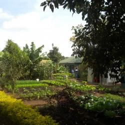 Доброволчеството: Пътешествие с мисия в Танзания - 7