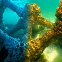 Спасяват коралите с 3D принтирани рифове