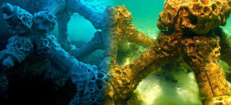 Спасяват коралите с 3D принтирани рифове - 1
