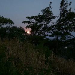 Доброволчеството: Пътешествие с мисия в Танзания - 11
