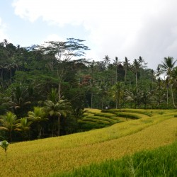 Топ 5 различни преживявания, когато сте в Бали - 2