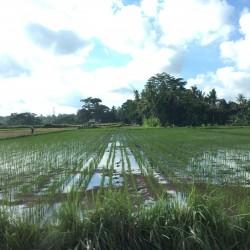 Топ 5 различни преживявания, когато сте в Бали - 4
