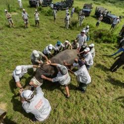 На сафари за запазване на дивите животни - 3