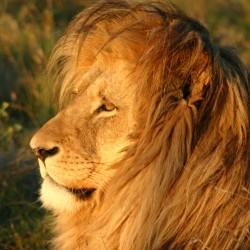 На сафари за запазване на дивите животни - 5