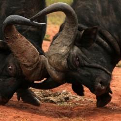 На сафари за запазване на дивите животни - 6