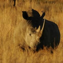 На сафари за запазване на дивите животни - 7