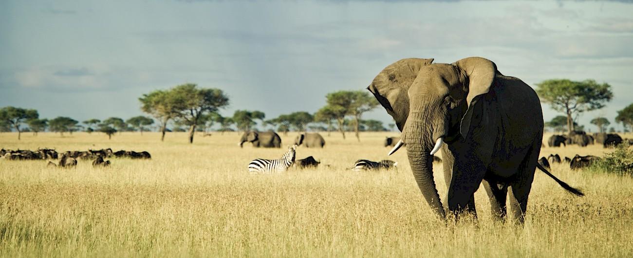 На сафари за запазване на дивите животни