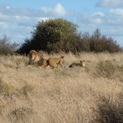 На сафари за запазване на дивите животни - 9