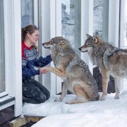Нощувка с вълци - 1