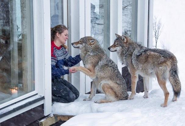 Нощувка с вълци