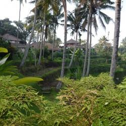 Топ 5 различни преживявания, когато сте в Бали - 13