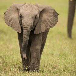 На сафари за запазване на дивите животни - 11