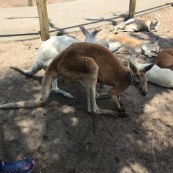 В търсене на преживявания в Западна Австралия - 5