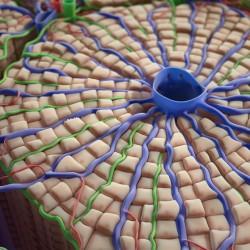 Човешка клетка с големината на цял град - 3