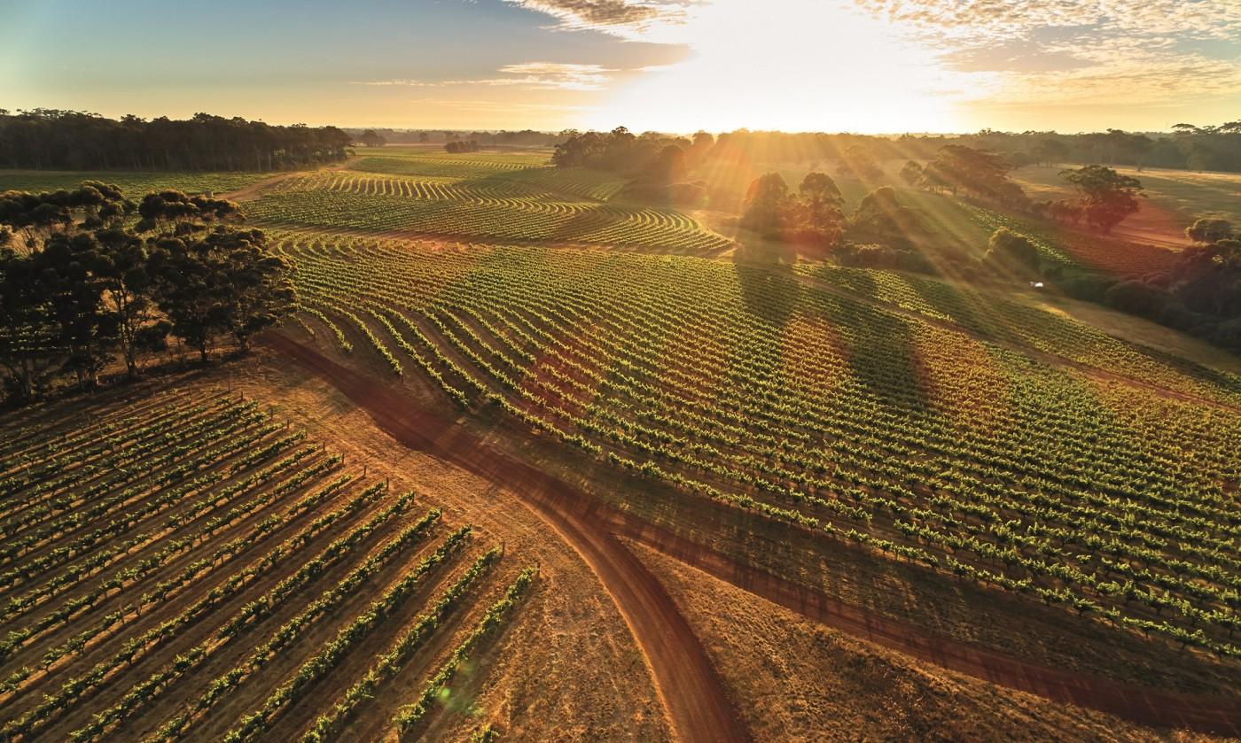 лозя, вино, бутилка, австралия