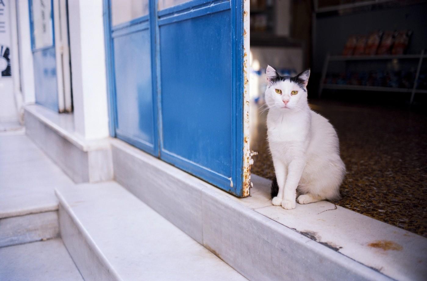 Гърция, котка