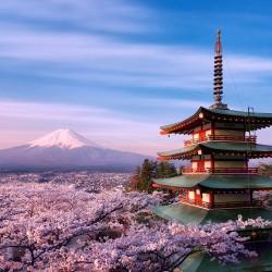 В Япония магията, наречена сакура, продължава от края на март чак до май - 3