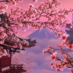 В Япония магията, наречена сакура, продължава от края на март чак до май - 1