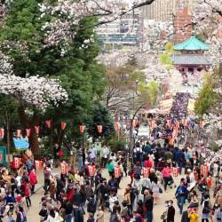 В Япония магията, наречена сакура, продължава от края на март чак до май - 9
