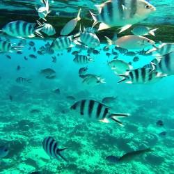 Мавриций – звездата на Индийския океан - 19