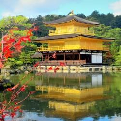 В Япония магията, наречена сакура, продължава от края на март чак до май - 18