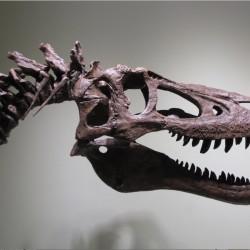 Новата мода: тиранозавър рекс вкъщи - 2