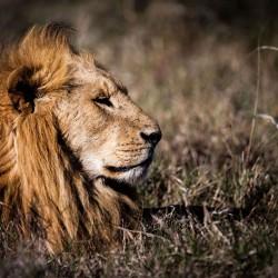 Кения: дивото зове - 5