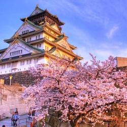 В Япония магията, наречена сакура, продължава от края на март чак до май - 20