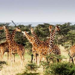 Кения: дивото зове - 6