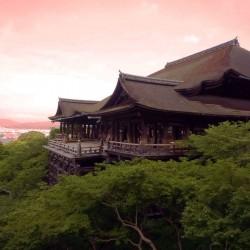 В Япония магията, наречена сакура, продължава от края на март чак до май - 21